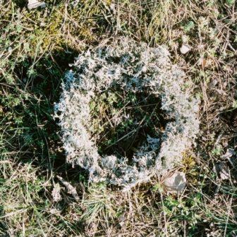 Cercle de Lichen, Land Art de Vivien Lacueille