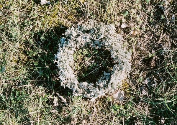 cercle de lichen